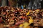 autumn-101329_640